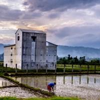 Petani, Sawah Dan Rumah Walet