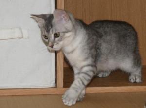 わが家の子猫