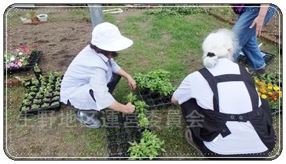 花壇植え替え6