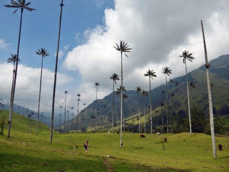 valle-de-cocora-salento-colombia