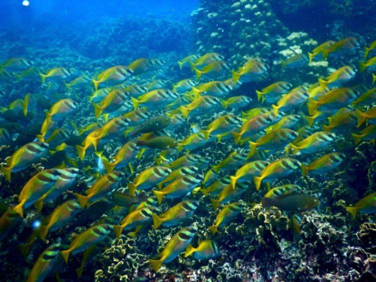 vissen-diving