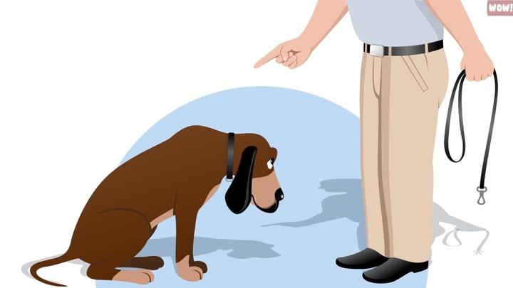 כלב ששונא את העובדה שאדם מעניש אותו.