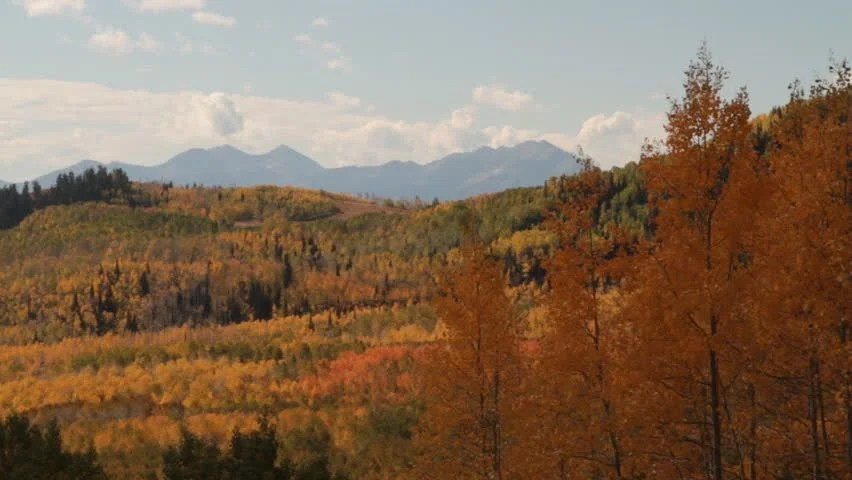 Mountains And Yellow Aspen Trees Stock Footage Video 3498836 - Shutterstock