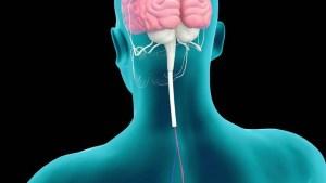 Male Kidney Anatomy In Blue Orange Xray View Stock Footage Video 1286992  Shutterstock