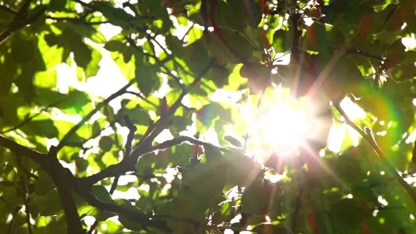 Image result for sunlight through branches