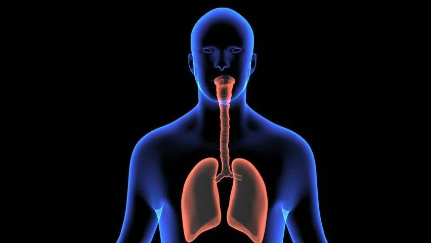 Respiratory System Loop Stock Footage Video 1270282