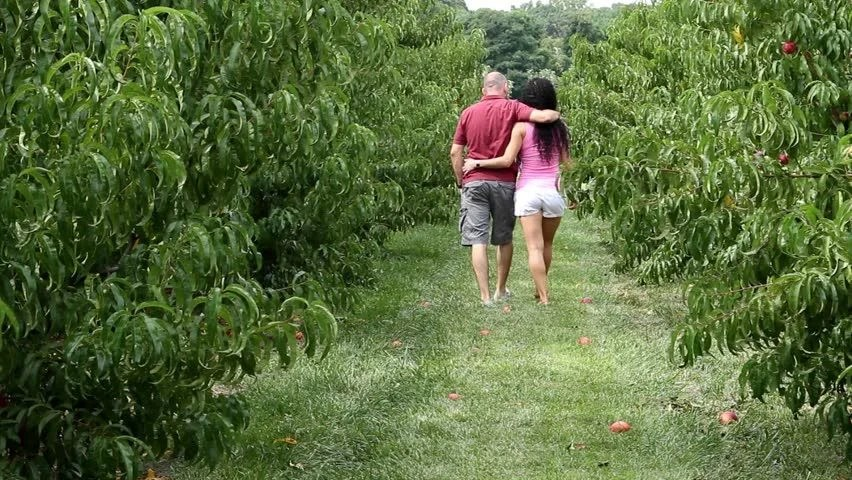 Image result for A walk in an orchard
