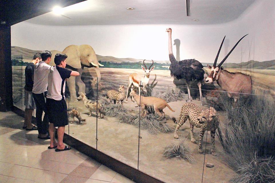 Resultado de imagen para museo de fauna y ciencias naturales