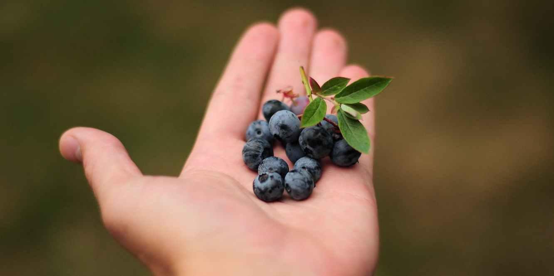 Berries for fertility