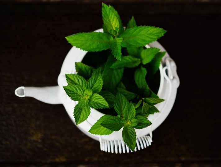 Chinese Herb Acupuncture FAQs Auckland