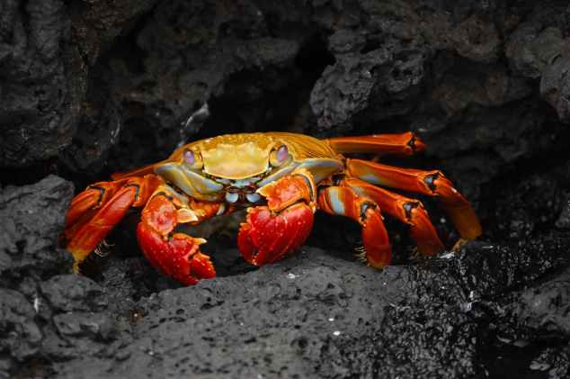 rocks animal crab cancer starsign