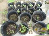 purple-corn-broccoli-sweetpeppers-parsley-ilandvibez-stmaarten