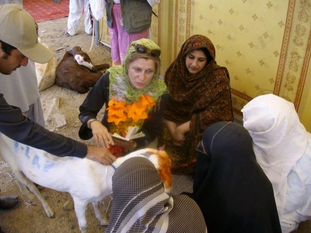 Livestock Goats Distribution KPK 2012