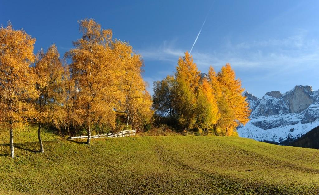 I colori dei larici nel fondovalle