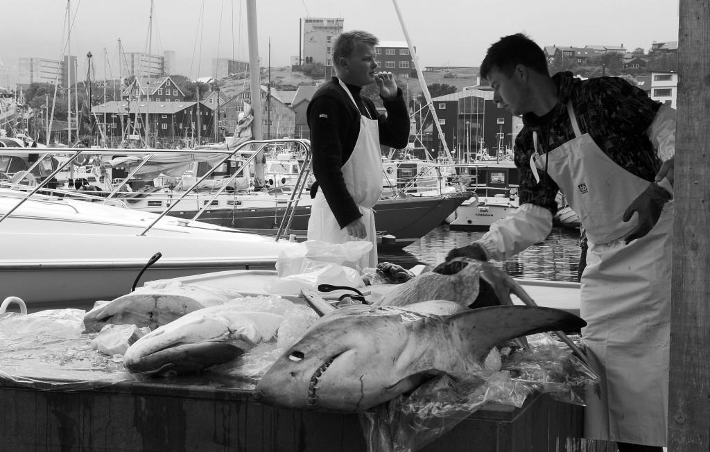 Il mercato del pesce nel porto di TORSHAVN
