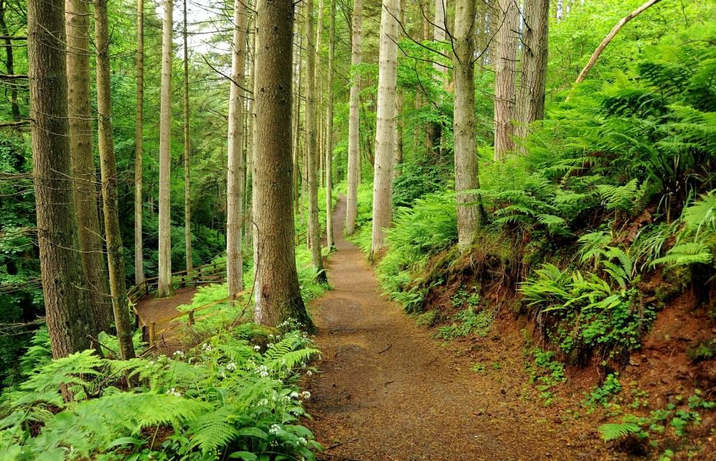Uno dei sentieri nella foresta