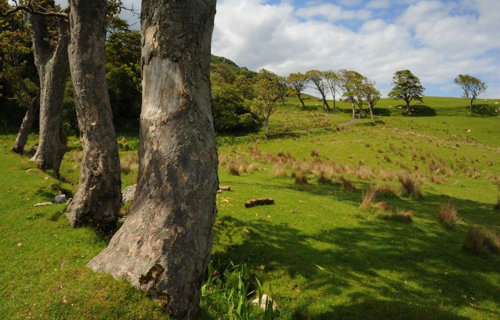 I grandi alberi che costeggiano il sentiero verso la baia