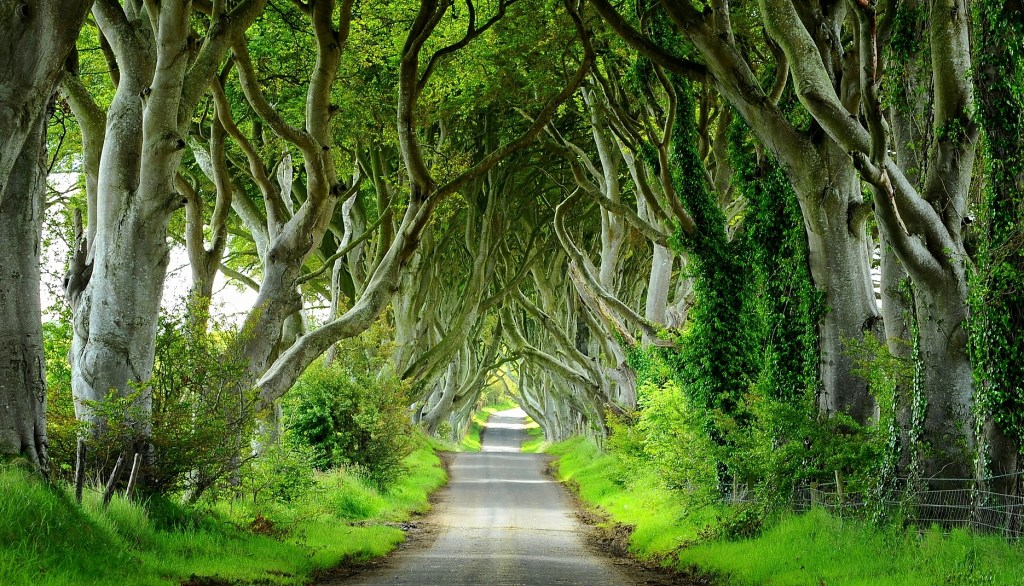"""THE DARK HEDGES"" nella veste primaverile"