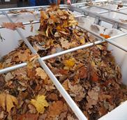 autumn-leaves-1-1