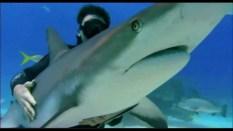 Rob Stewart in una scena di Sharkwater