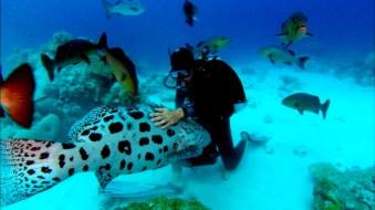 Rob Stewart in Sharkwater