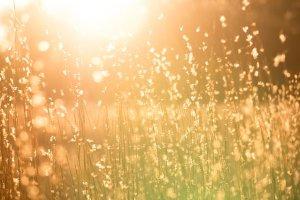 Estate di Vivaldi, immagini sonore di una calda giornata estiva