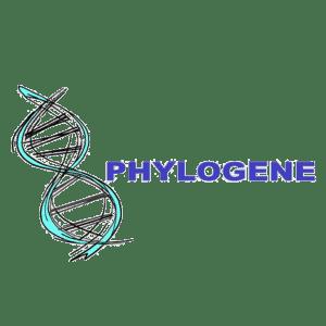 Phylogène