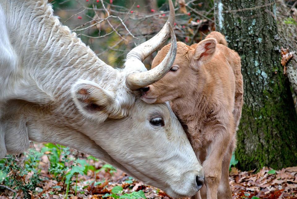 sensibilite animale