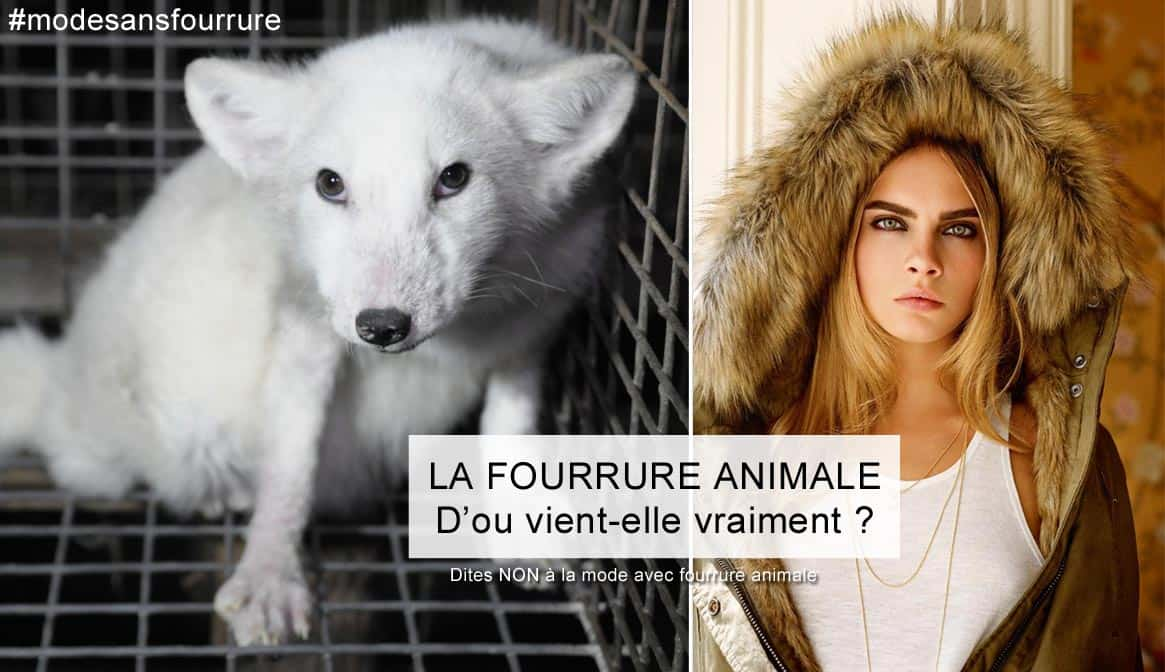 La fourrure animale et la mode : L'envers du décor