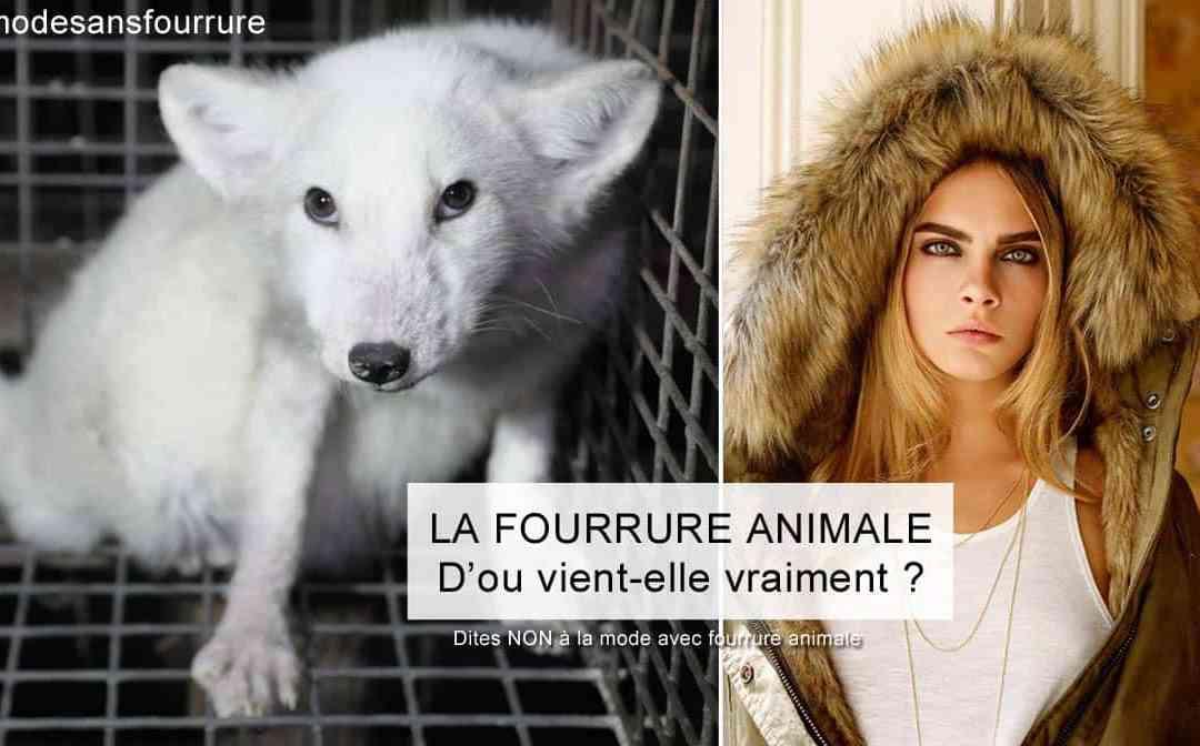 La fourrure animale et la mode : L'envers du décor