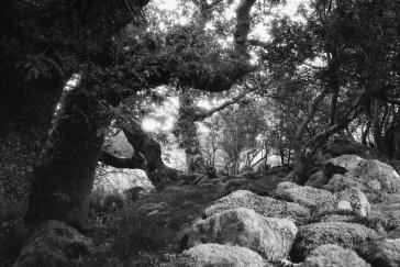 Black and white photo of trees by @Jeff Ellams shot on Ilford SFX 200