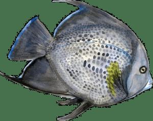 pesce-acquerello