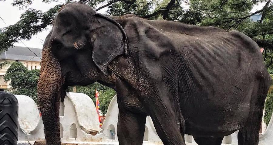 sick-elephant