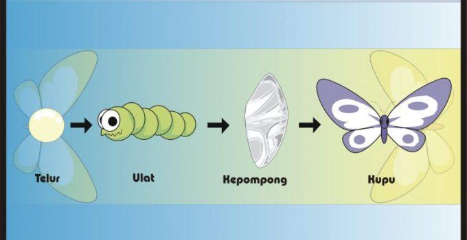 metamorfosis kupu kupu - Jenis Daur Hidup Kupu Kupu