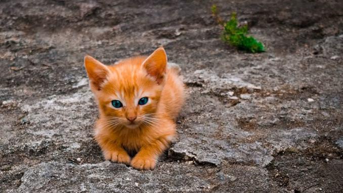 Nama Kucing Anggora Betina