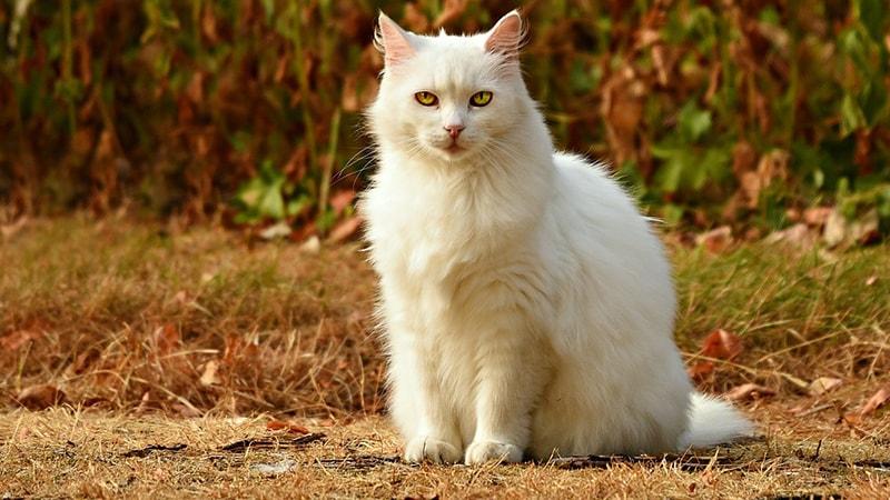 nama untuk kucing