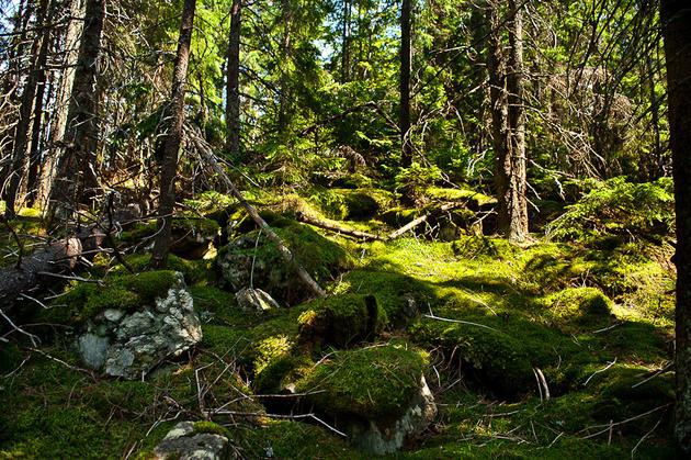 Carpathian Mountains, Ukraine