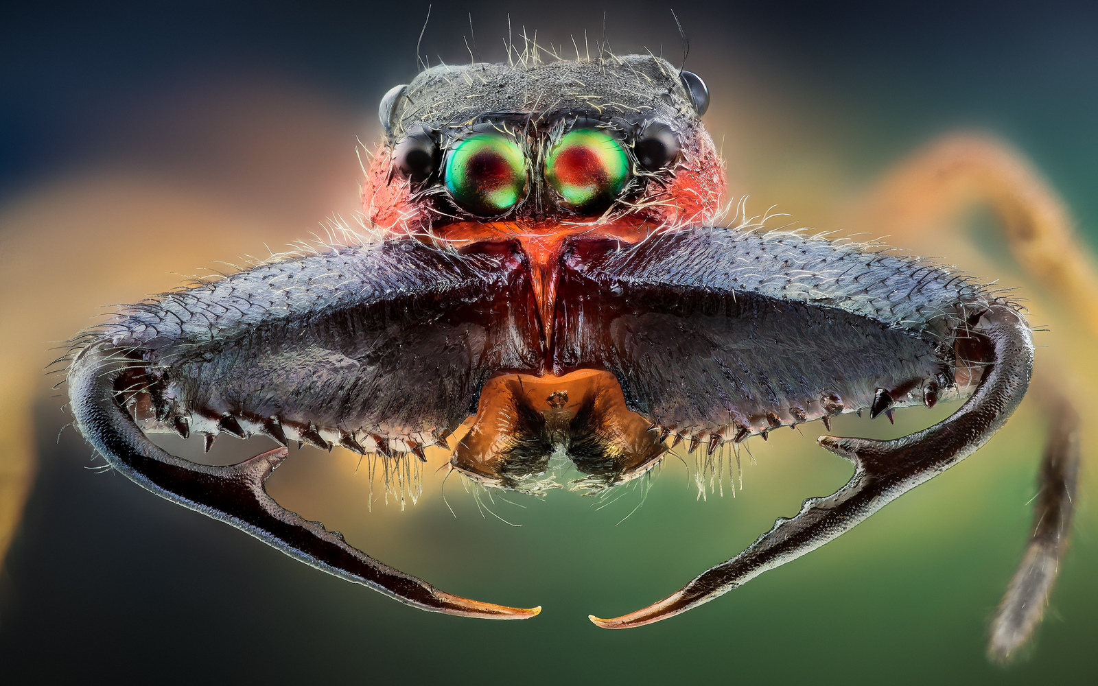 Macro Insect Woahdude
