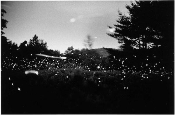 wavehillfireflies8