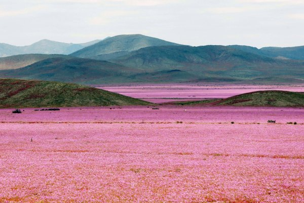epaselect_chile_nature_desert
