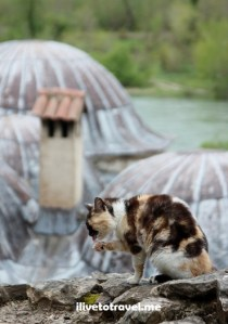 Bosnia, cat, gato, Balkans, Europe, travel, photo