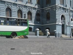 Valparaiso, Valpo,Chile, travel, tourism, charm, Canon EOS Rebel, photo, architecture, dog