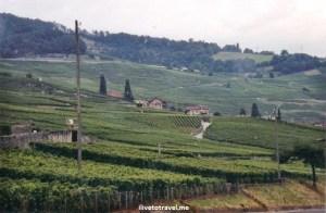 Swiss, vineyards, Switzerland, Alps, drive, driving, travel, tourism, Canon EOS Rebel