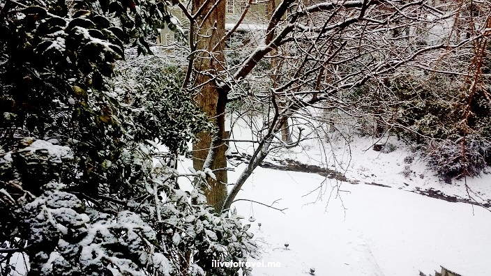 Atlanta, tree, snow, winter, photo, Samsung Galaxy