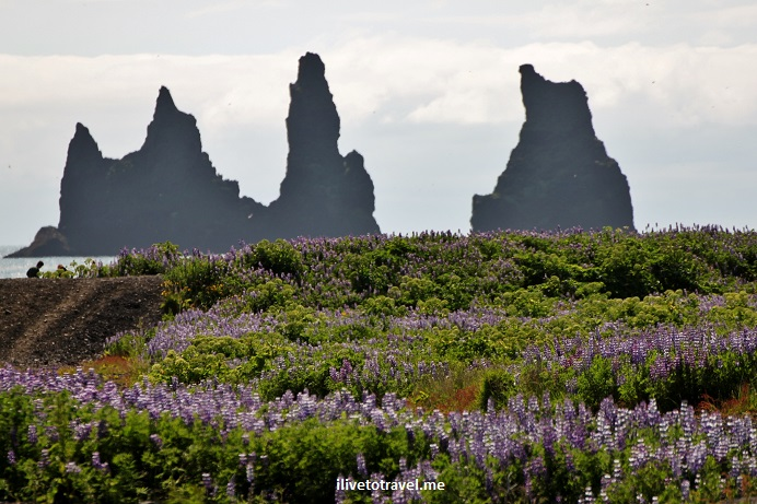 Vik, Iceland, village, flowers, scenic, landscape, photo, travel, Canon EOS Rebel