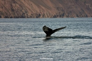 Can't Beat Whale Watching in Iceland!