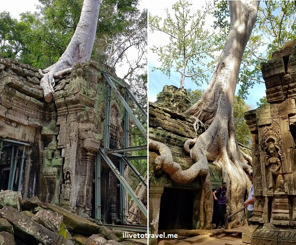 Ta Prohm, Siem Reap, Angkor Wat, Cambodia, Cambodge, travel, explore, adventure, travel, photo, Samsung Galaxy, S7, banyan