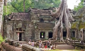 Ta Prohm, Cambodia:  Trees Take over a Temple