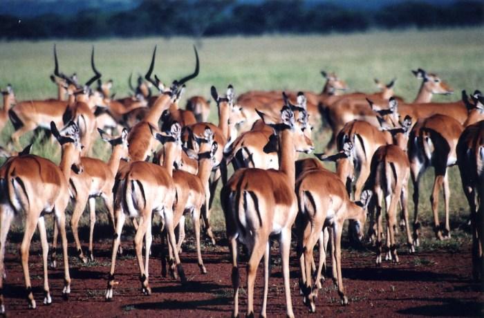 tanzania, mwanza, serengeti, Lake Victoria, wildlife, Africa, adventure, outdoors, safari