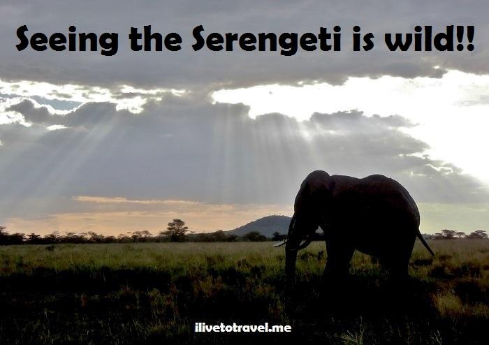 Ngorongoro, wilidlife, Serengeti, safari, Tanzania, explore, adventure, Africa, travel, photos, sunset, elephant